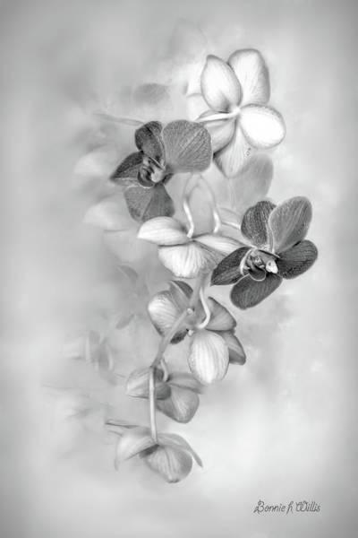 Digital Art - Orchid by Bonnie Willis