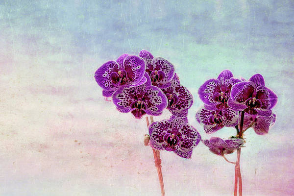 Photograph - Orchid Bouquet by Kay Brewer