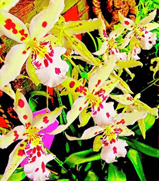 Photograph - Orchid Carnivale Aloha by Joalene Young