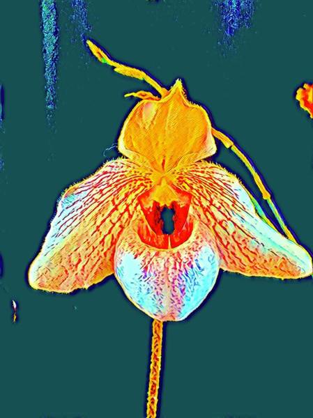 Photograph - Orchid Consciousness In Blue Aloha  by Joalene Young