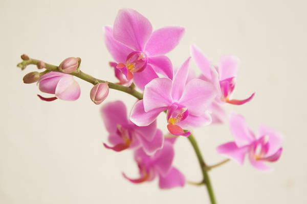 Wedding Bouquet Photograph - Orchid by Ejla