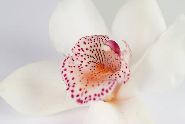 Cymbidium Photograph - Orchid by Emilbaiera