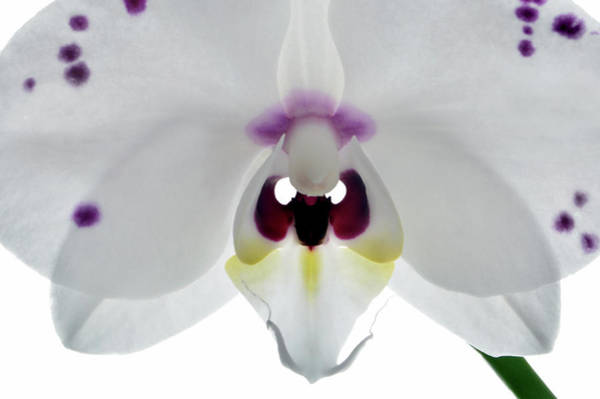 Wall Art - Photograph - Orchid Eyes. by Terence Davis