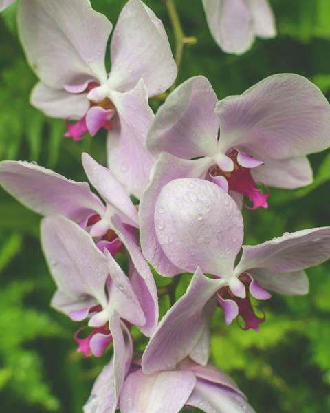 Photograph - Orchid Flower Close Up B by Jacek Wojnarowski