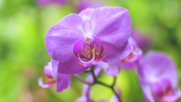 Photograph - Orchid Flower Close Up C by Jacek Wojnarowski
