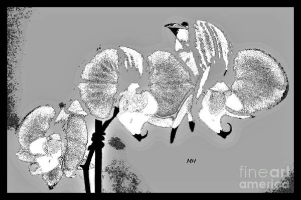 Wall Art - Photograph - Orchid Illussion by Marsha Heiken