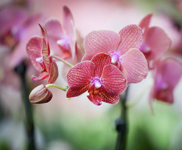 Fragility Photograph - Orchid In A Garden by Ary6