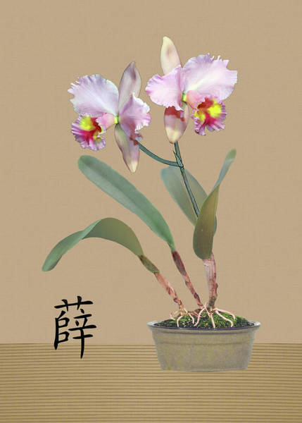 Wall Art - Digital Art - Orchid In Pot by Spadecaller