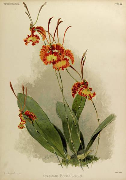 Wall Art - Painting - Orchid, Oncidium Kramerianum by Henry Frederick Conrad Sander