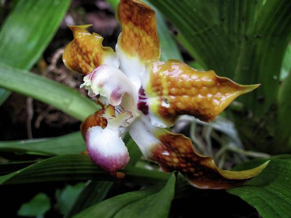 Photograph - Orchid - Panama by Rick Veldman