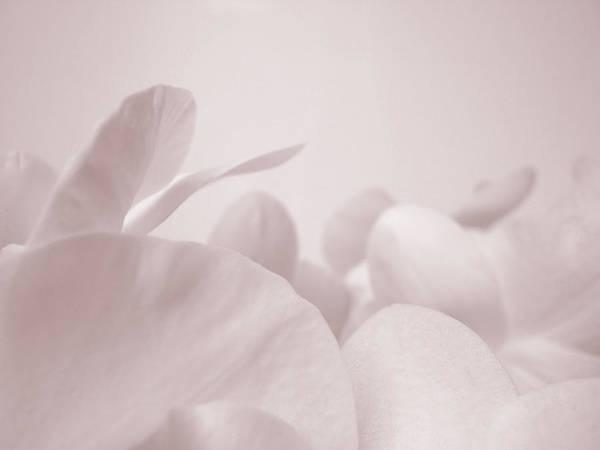 Petal Photograph - Orchid Petals by Havet