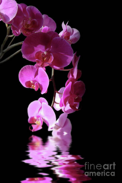 Wall Art - Photograph - Orchid Reflections by Delphimages Photo Creations
