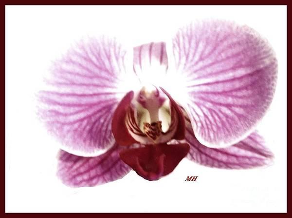 Wall Art - Photograph - Orchid So Fine by Marsha Heiken