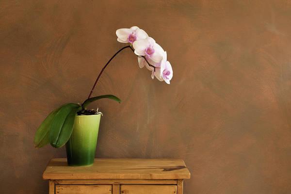 Orchid Still Life Hz Art Print by Yinyang