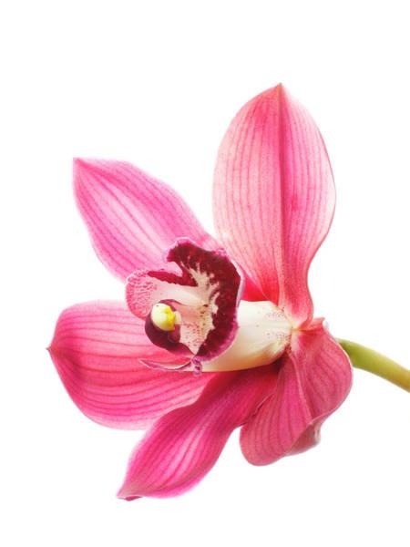 Cymbidium Photograph - Orchid by Studio 504