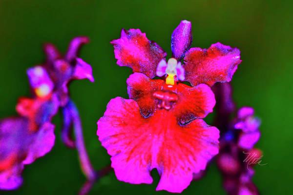 Photograph - Orchid Study Three by Meta Gatschenberger