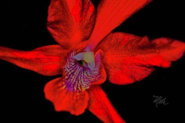 Photograph - Orchid Study Twelve by Meta Gatschenberger