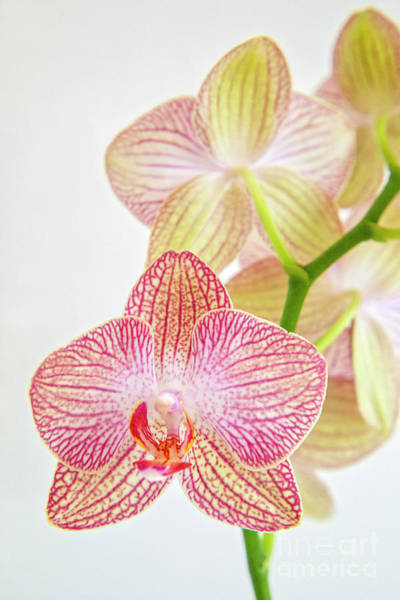 Wall Art - Photograph - Orchid Symphony by Julia Hiebaum