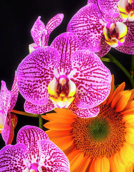 Wall Art - Photograph - Orchids And Sunflower by Garry Gay