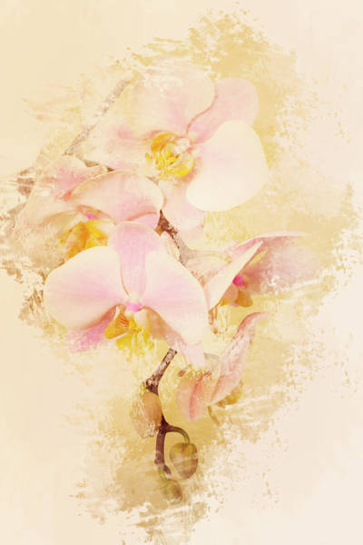 Photograph - Orchids by Angie Tirado