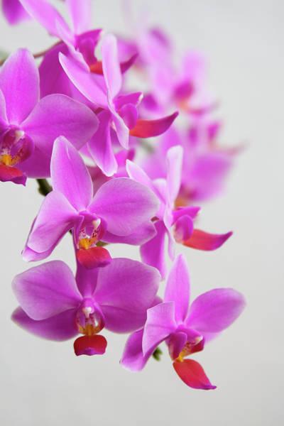 Wedding Bouquet Photograph - Orchids by Ejla