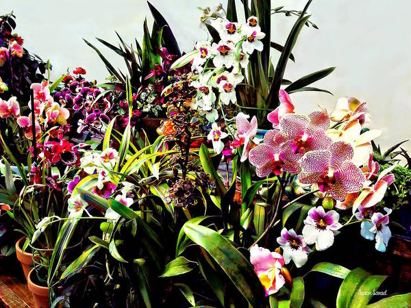 Photograph - Orchids In The Garden Center by Susan Savad