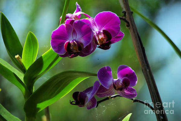 Wall Art - Photograph - Orchids by Jeff Swan