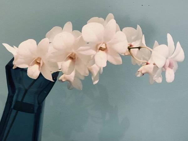 Photograph - Orchids by Karen Nicholson