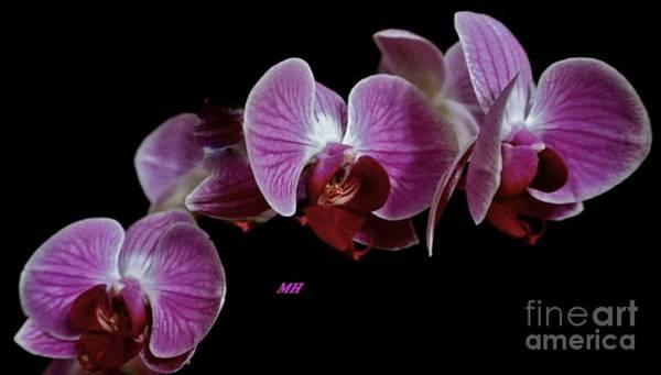 Wall Art - Photograph - Orchids Three by Marsha Heiken