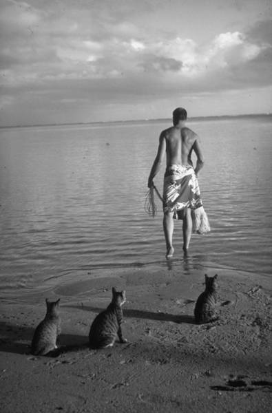 Sport Fishing Photograph - Ordinary Striped Tabby Cats Waiting On B by Carl Mydans