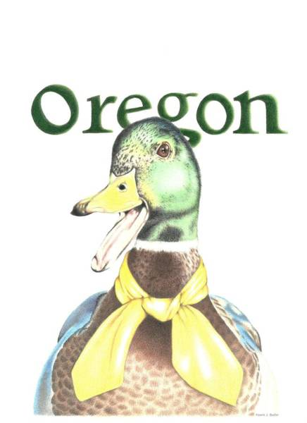 Drawing - Oregon Duck by Karrie J Butler