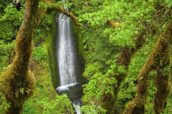 Eagle Photograph - Oregon Eagle Creek Trail Waterfall by Fotovoyager