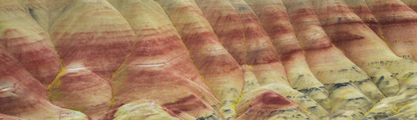 Photograph - Oregon Painted Hills by Leland D Howard