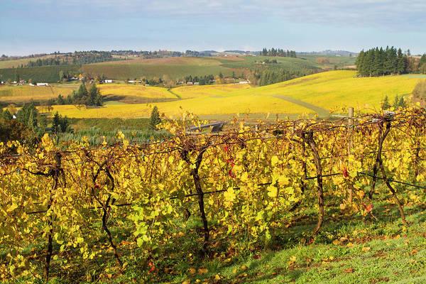 Willamette Photograph - Oregon Vineyards by Bob Pool