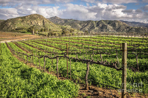 Photograph - Orfila Vineyards And Winery by Edward Fielding