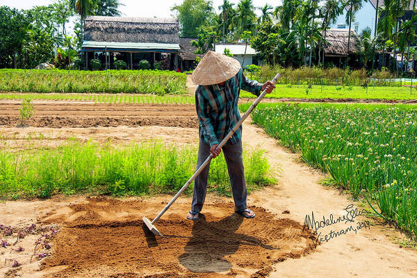 Wall Art - Photograph - Organic Farmer In Hoi An, Vietnam by Madeline Ellis