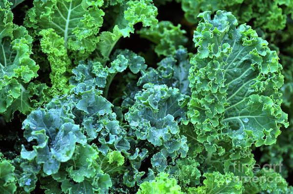 Wall Art - Photograph -  Organic Kale by Elaine Manley