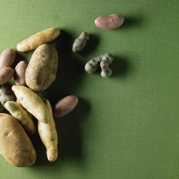 Sparse Photograph - Organic Potatoes by Monica Rodriguez