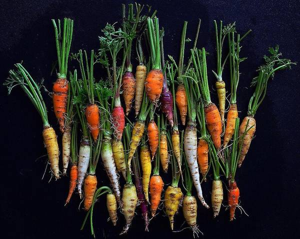 Organic Rainbow Carrots Art Print