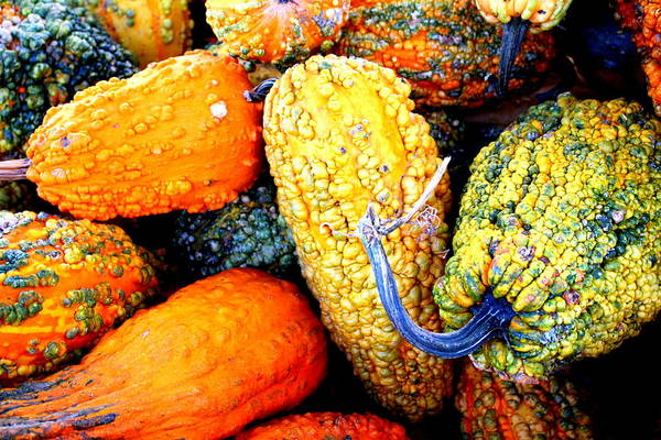 Photograph - Ornamental Gourds by Cynthia Guinn