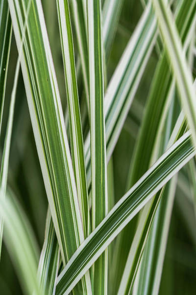 Photograph - Ornamental Grass by Robert Potts