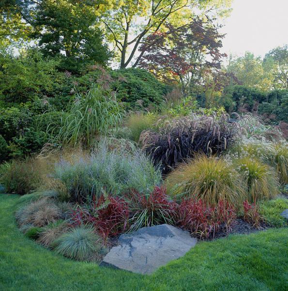 Pennisetum Photograph - Ornamental Grasses In Border by Richard Felber