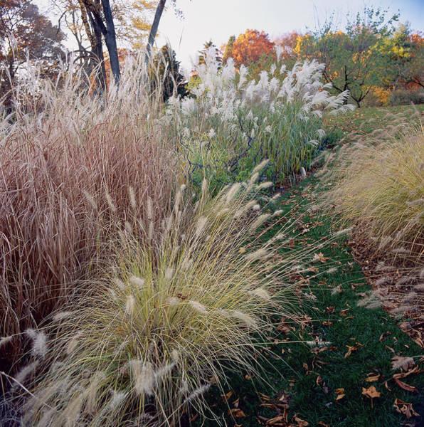 Variation Photograph - Ornamental Grasses Miscanthus by Richard Felber