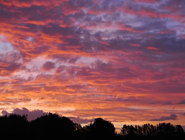 Wall Art - Photograph - Oropi Sunset by Peter Mooyman