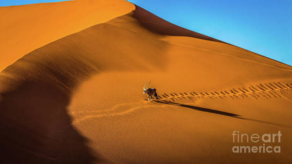 Photograph - Oryx Crossing Big Daddy Dune, Sossusvlei, Namibia by Lyl Dil Creations