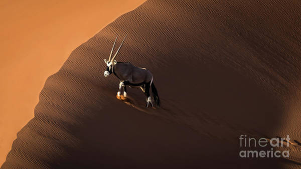 Photograph - Oryx, Namibia by Lyl Dil Creations