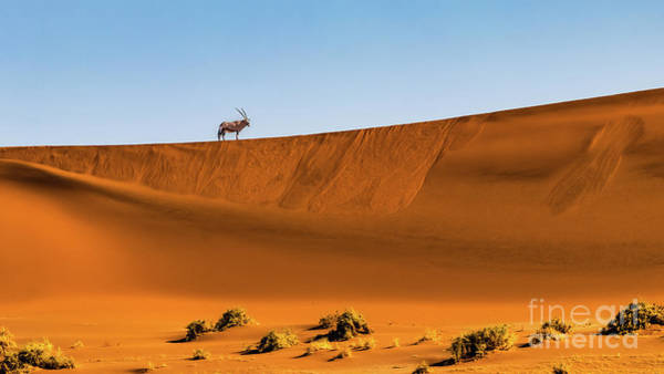 Photograph - Oryx On The Dune, Namibia by Lyl Dil Creations