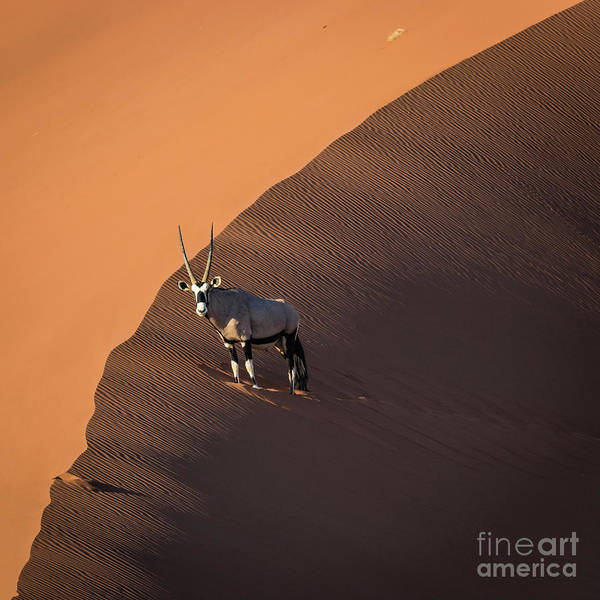 Photograph - Oryx On The Edge, Namibia by Lyl Dil Creations