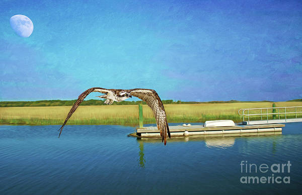 Marshland Photograph - Osprey At Sapelo by Laura D Young