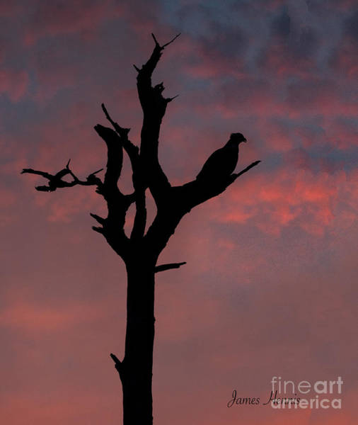 Photograph - Osprey At Sunset by James Hennis